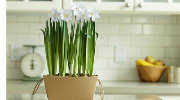 Cricut Paper Flowers: Make Potted Paperwhites