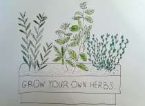 Inspired by my own tiny herb garden. I used micron pen and watercolour.