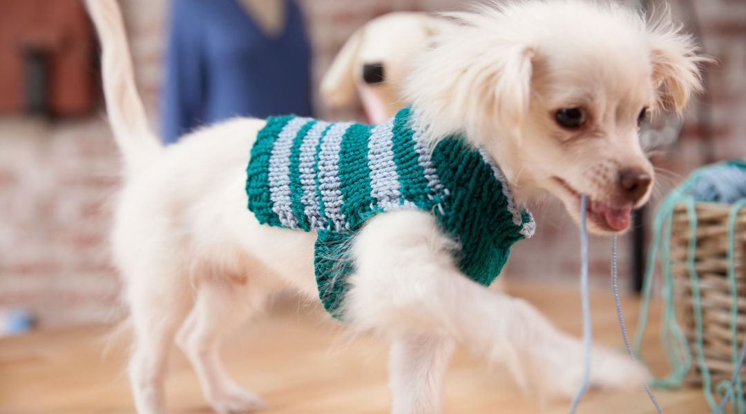 Wendy Bernard shows knitters a quick and easy way to whip up a personalized sweater for your dog using two knitted rectangles. - Creativebug