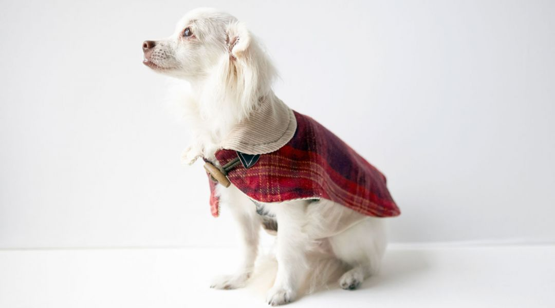 Simplicity Sewing: Make a Dog Coat