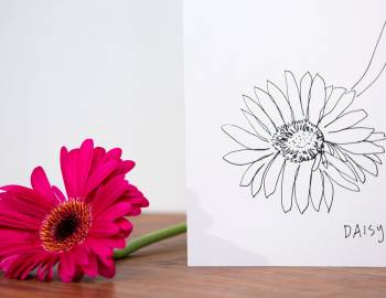 How to Draw a Gerbera Daisy